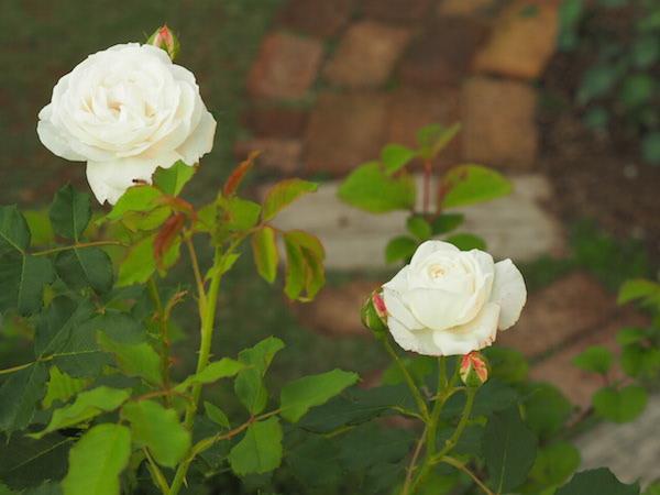 f:id:m-garden-life:20170512110610j:plain
