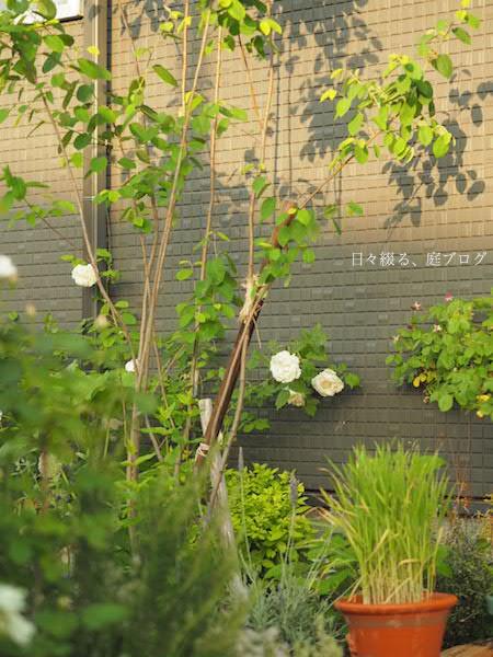 f:id:m-garden-life:20170512110747j:plain