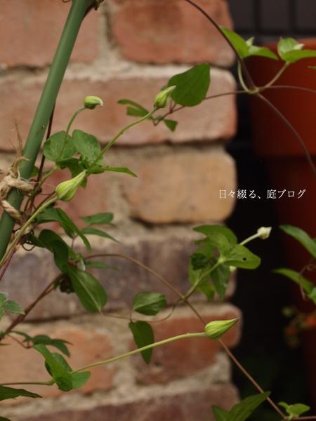 f:id:m-garden-life:20170512111915j:plain