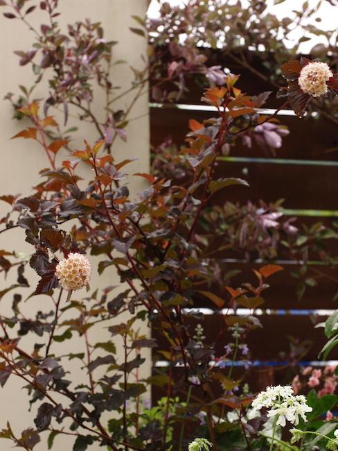 f:id:m-garden-life:20170513100250j:plain