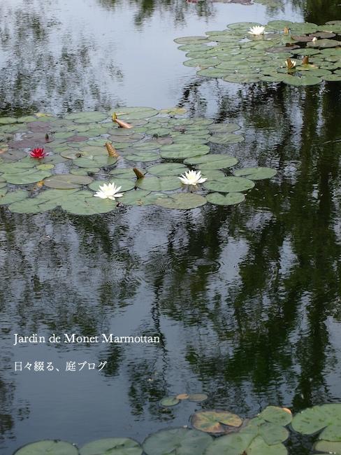 f:id:m-garden-life:20170515191307j:plain