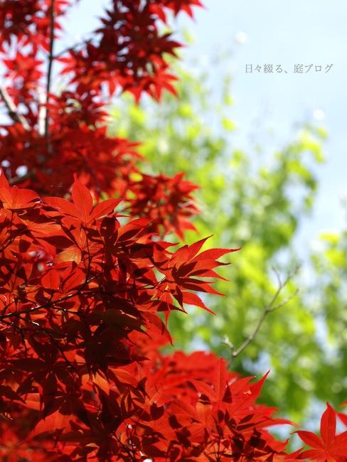 f:id:m-garden-life:20170515201411j:plain