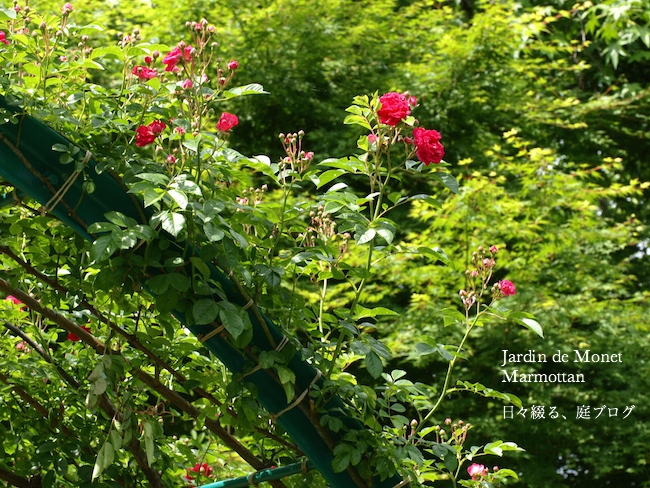 f:id:m-garden-life:20170515202403j:plain