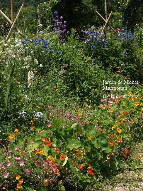 f:id:m-garden-life:20170516171720j:plain