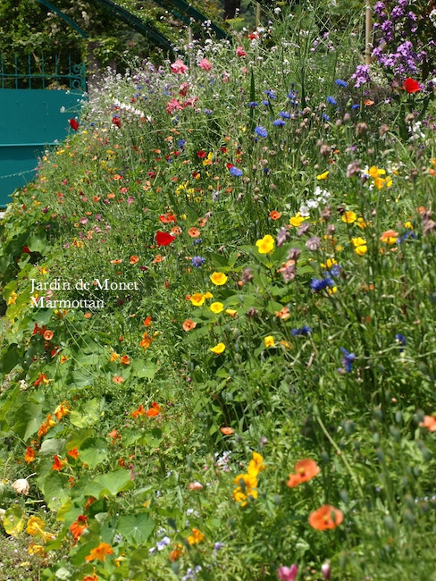 f:id:m-garden-life:20170516171829j:plain
