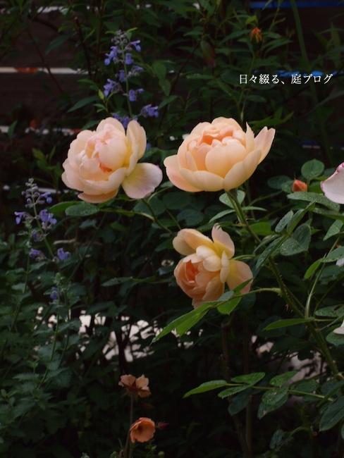 f:id:m-garden-life:20170517164954j:plain