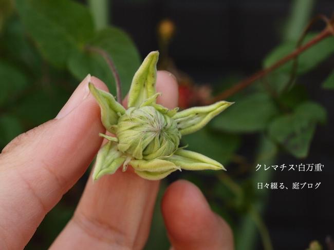 f:id:m-garden-life:20170517170212j:plain
