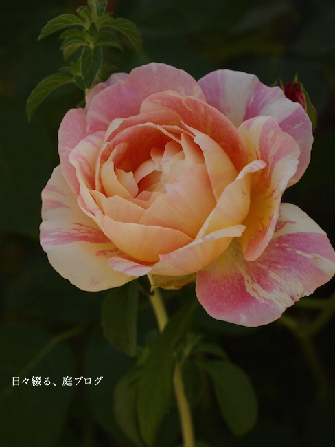 f:id:m-garden-life:20170517170305j:plain