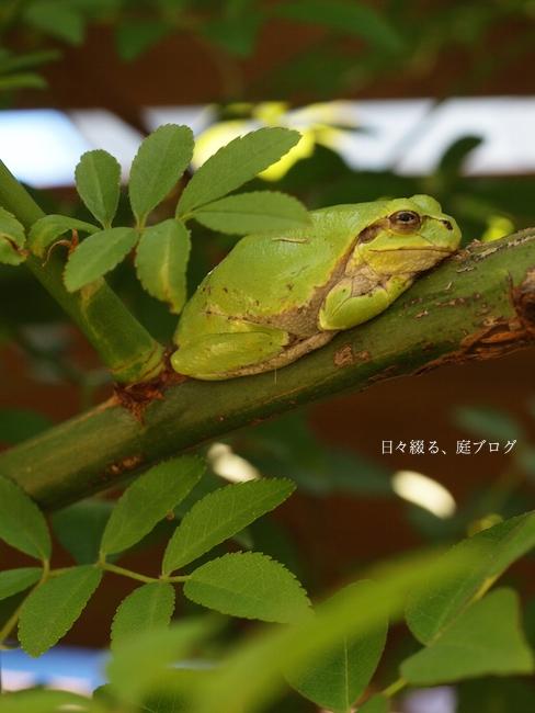 f:id:m-garden-life:20170518095707j:plain
