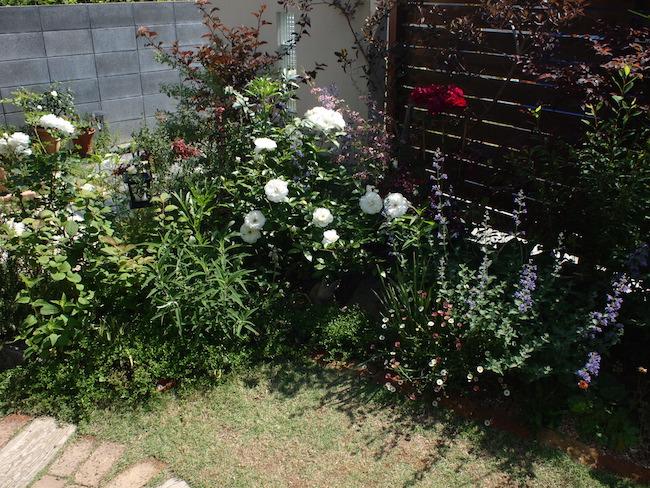 f:id:m-garden-life:20170518101843j:plain