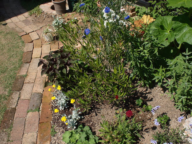 f:id:m-garden-life:20170518102448j:plain