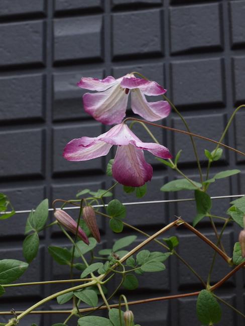 f:id:m-garden-life:20170521142002j:plain
