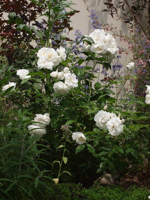 f:id:m-garden-life:20170521142715j:plain