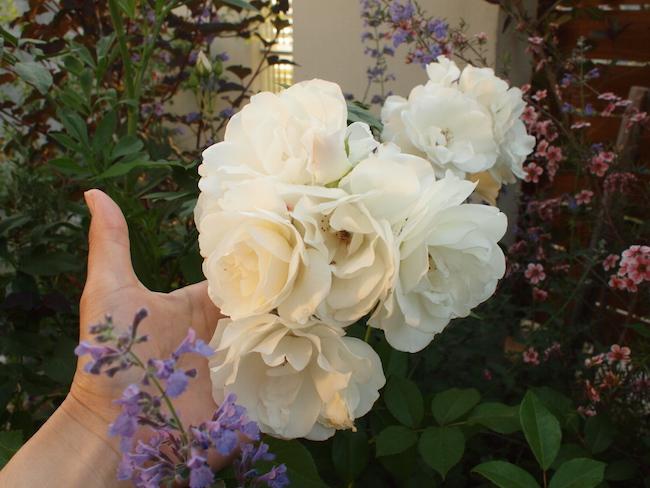 f:id:m-garden-life:20170521142751j:plain