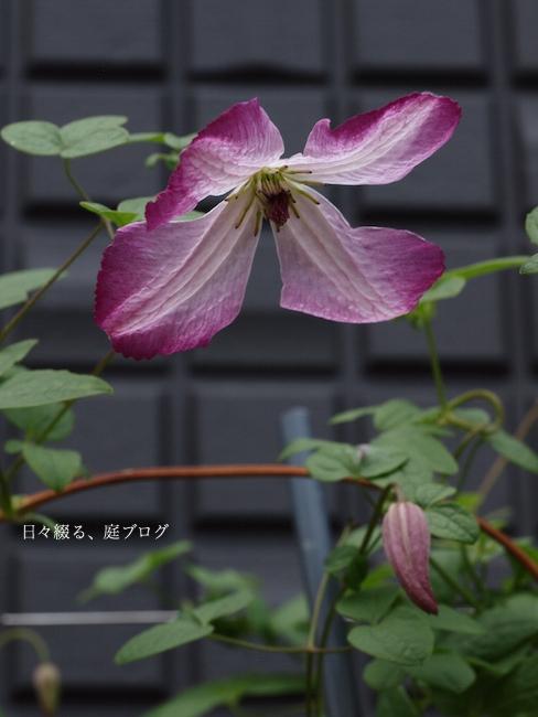 f:id:m-garden-life:20170521154759j:plain