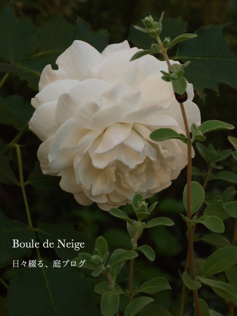 f:id:m-garden-life:20170522173805j:plain