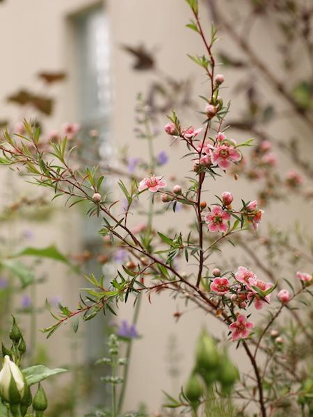 f:id:m-garden-life:20170524202637j:plain