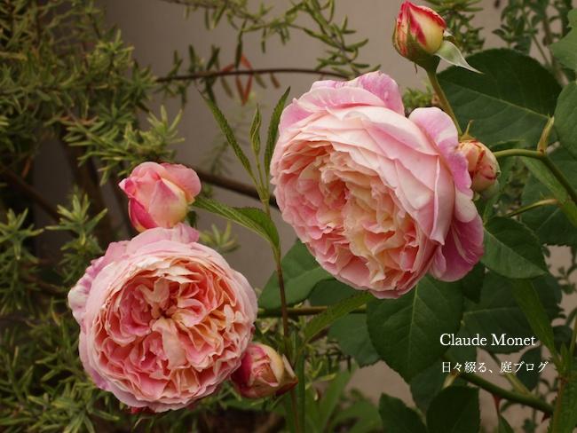 f:id:m-garden-life:20170525114945j:plain