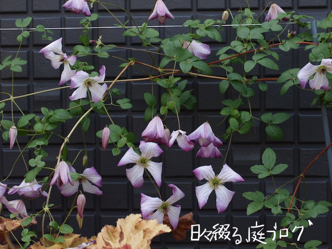 f:id:m-garden-life:20170526154132j:plain