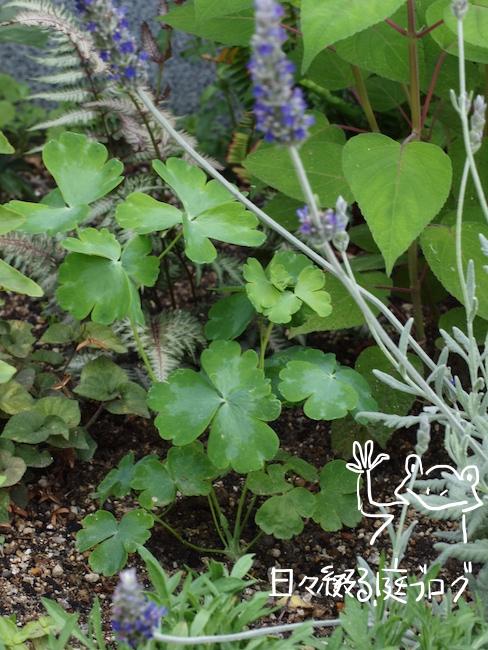 f:id:m-garden-life:20170526154501j:plain