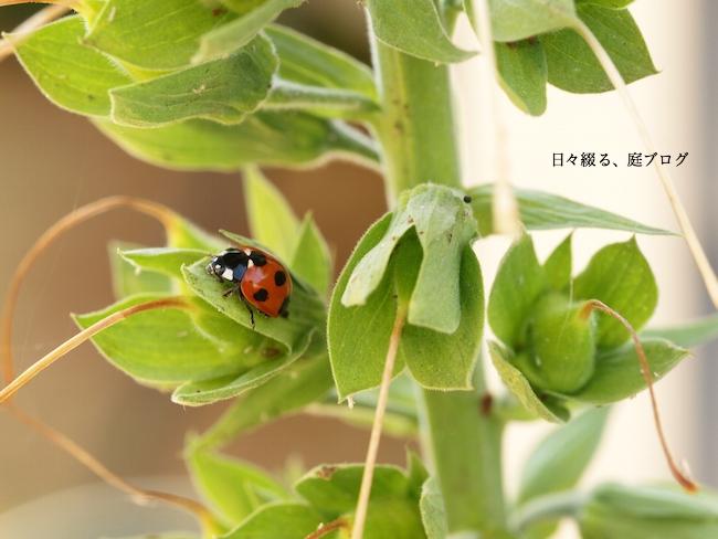 f:id:m-garden-life:20170527164844j:plain