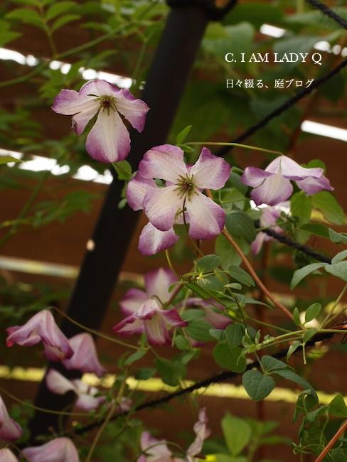 f:id:m-garden-life:20170529080530j:plain