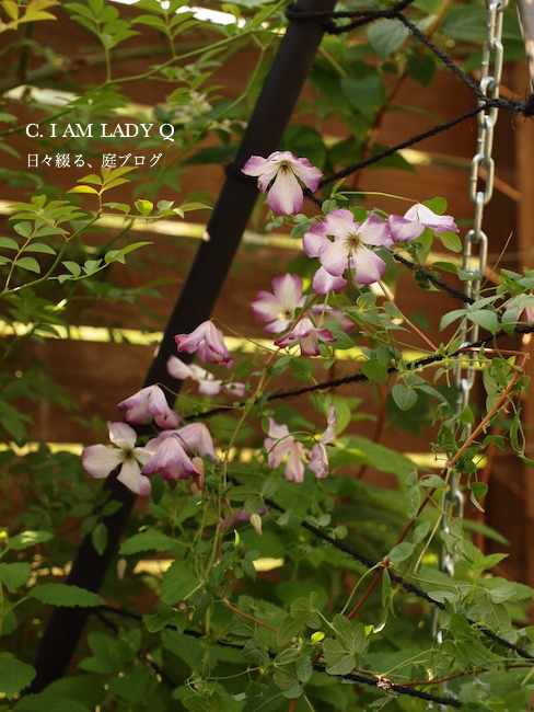 f:id:m-garden-life:20170529080553j:plain