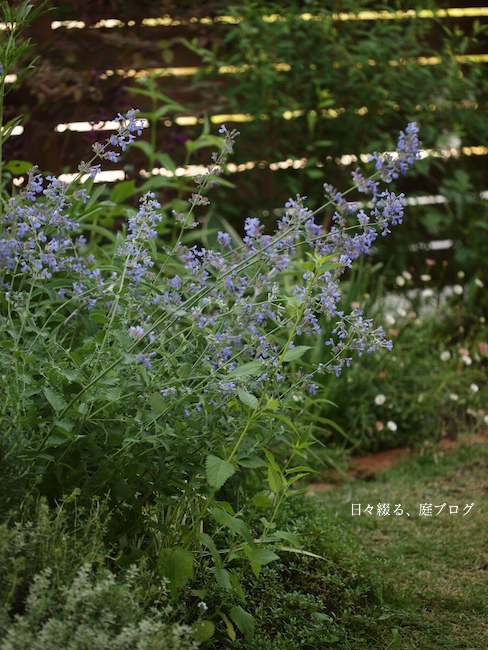 f:id:m-garden-life:20170529162509j:plain