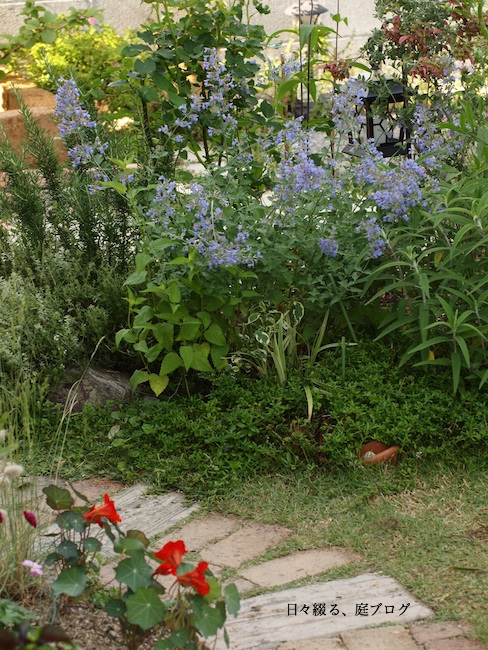 f:id:m-garden-life:20170529162719j:plain