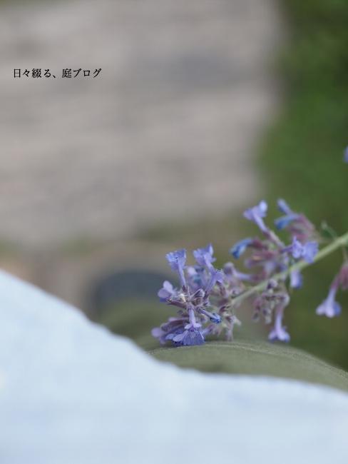 f:id:m-garden-life:20170529163427j:plain
