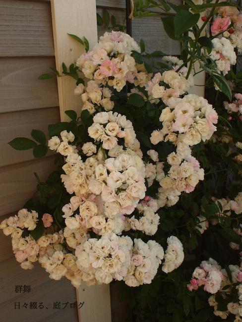 f:id:m-garden-life:20170530173856j:plain