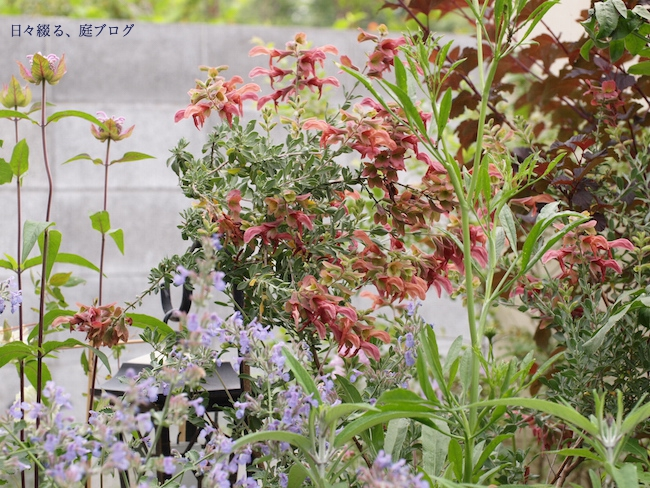 f:id:m-garden-life:20170531080853j:plain