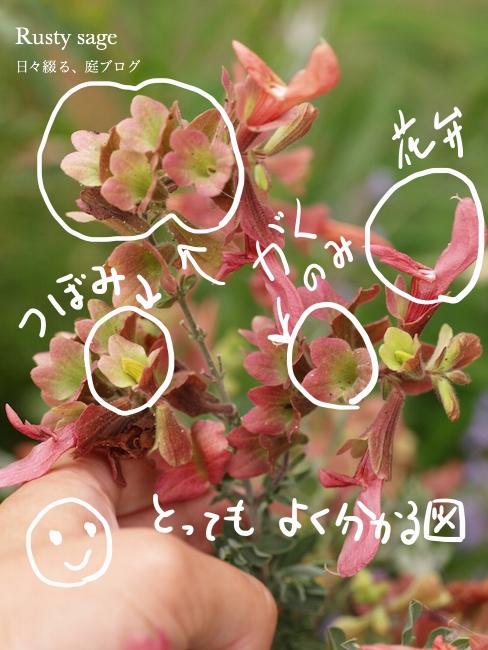 f:id:m-garden-life:20170531082343j:plain