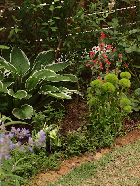 f:id:m-garden-life:20170601160324j:plain