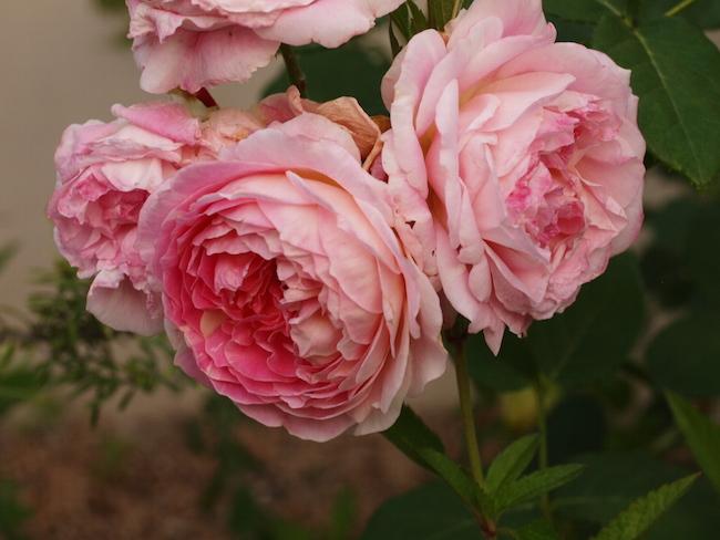 f:id:m-garden-life:20170601161512j:plain