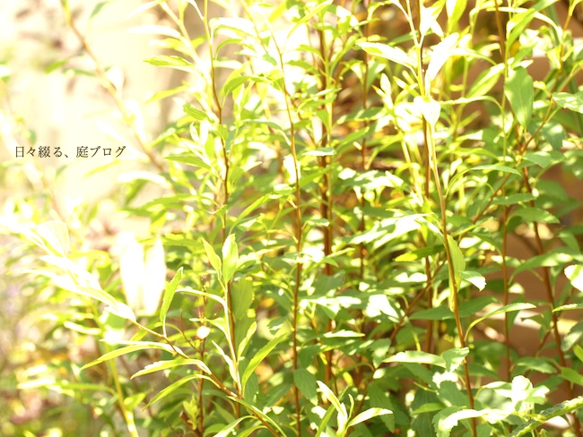 f:id:m-garden-life:20170602190429j:plain