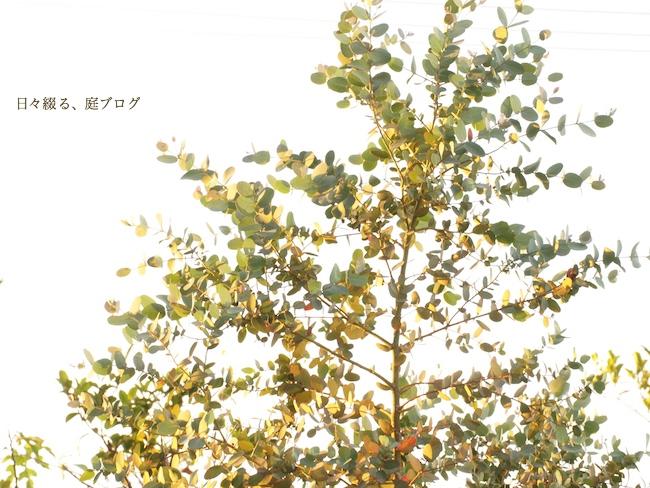 f:id:m-garden-life:20170602190444j:plain