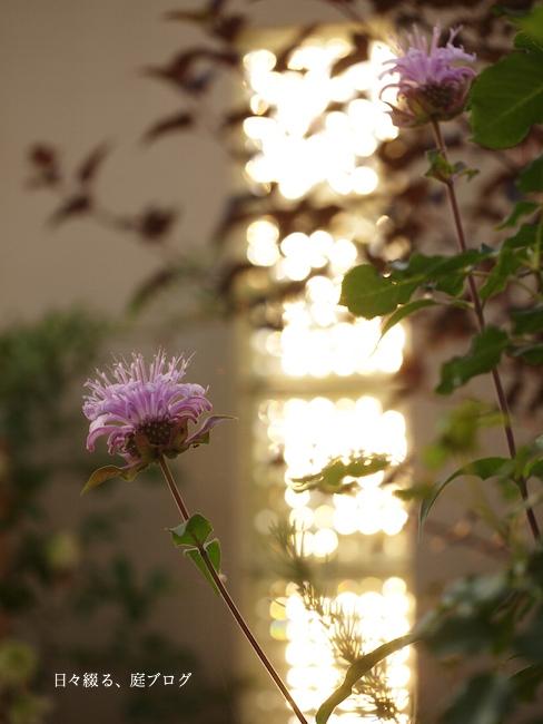 f:id:m-garden-life:20170604075654j:plain