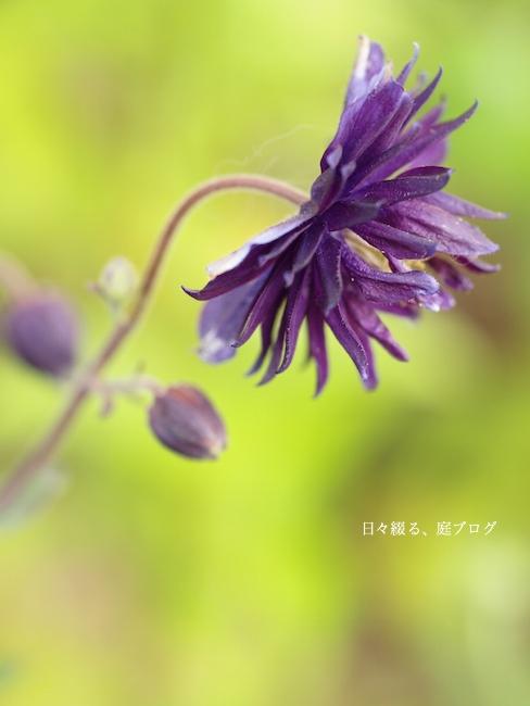 f:id:m-garden-life:20170604080532j:plain