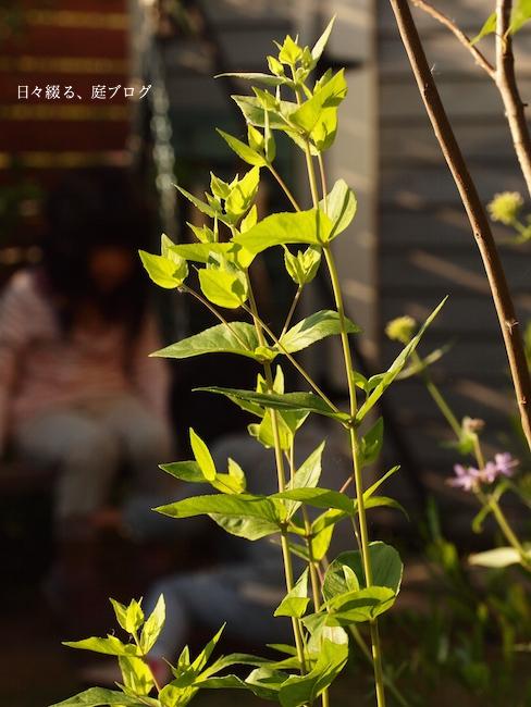 f:id:m-garden-life:20170604080822j:plain