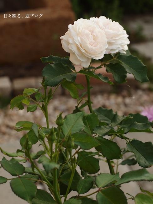 f:id:m-garden-life:20170604081824j:plain