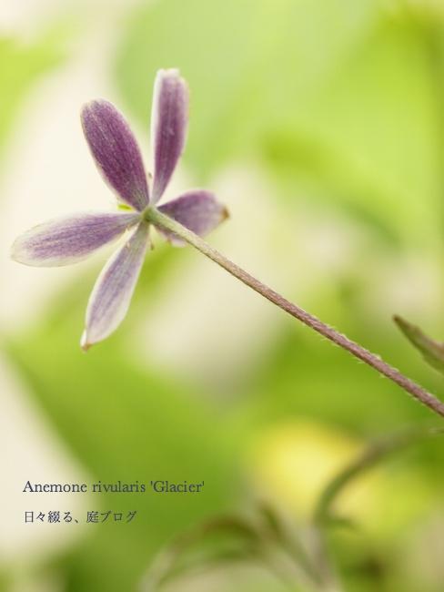 f:id:m-garden-life:20170606091528j:plain