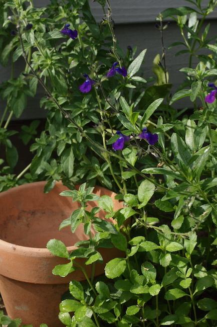 f:id:m-garden-life:20170606093033j:plain