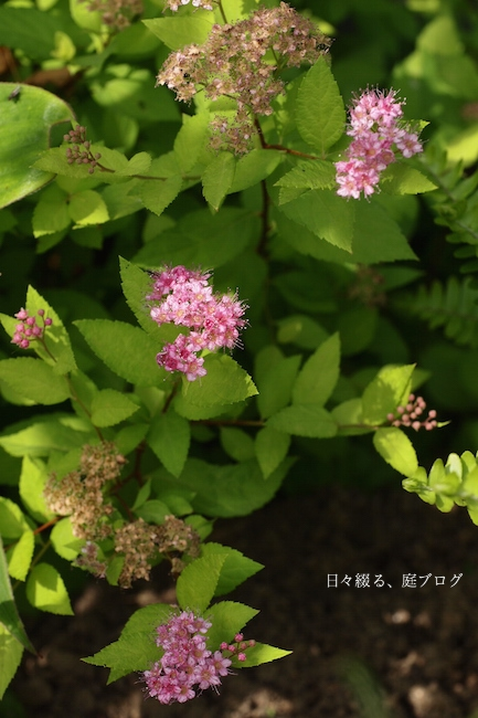 f:id:m-garden-life:20170606093220j:plain
