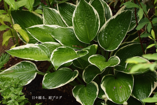 f:id:m-garden-life:20170607145135j:plain