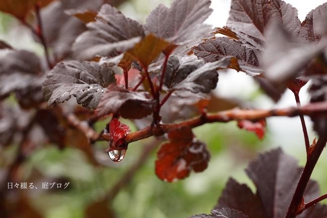 f:id:m-garden-life:20170607145210j:plain