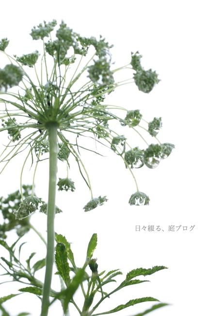 f:id:m-garden-life:20170608060853j:plain