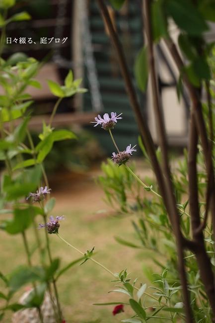 f:id:m-garden-life:20170612181233j:plain