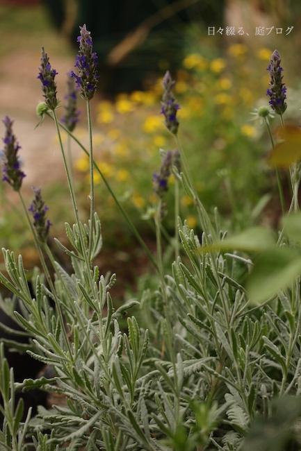 f:id:m-garden-life:20170612181304j:plain