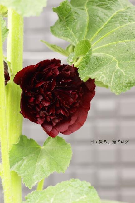 f:id:m-garden-life:20170612181324j:plain